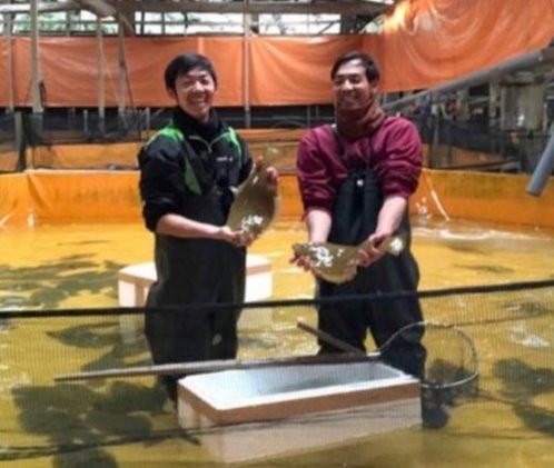 ヒラメの養殖