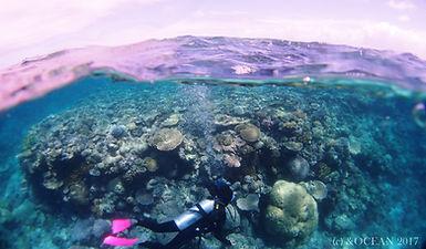 グレートバリアリーフ 珊瑚礁