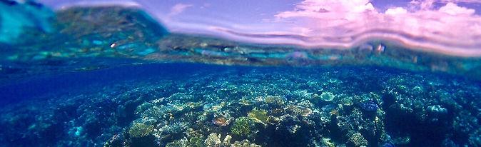 サンゴの上を泳ぐダイバー