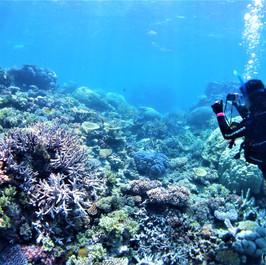 カラフルなサンゴとダイバー
