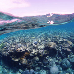半水面サンゴ