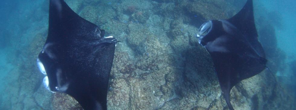 manta island1
