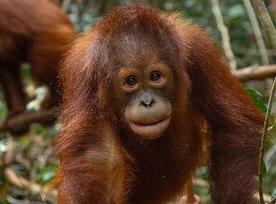 Borneo   Asia   Malaysia   School & Group Travel
