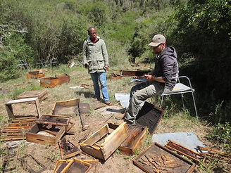 Beehive Vandalism Theft