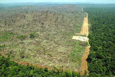 Garden Route Deforestation