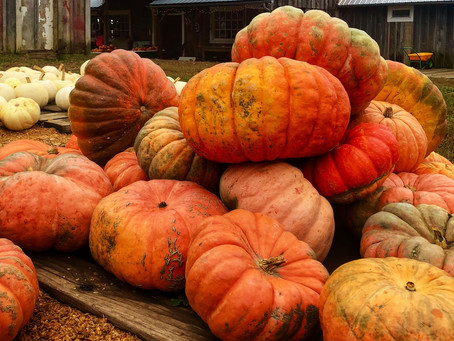 Fall in Love with Fall- Local KC Activities