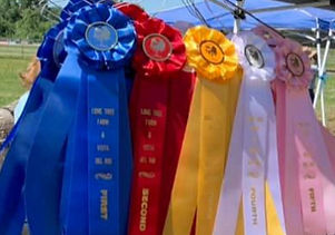 ribbons_edited_edited.jpg