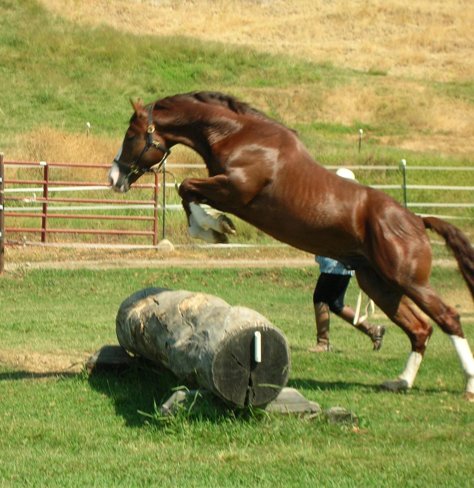 Bridon jump 9-06-1