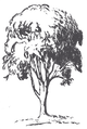 NEW LTF LOGO TRANSPARENT SMALL.png