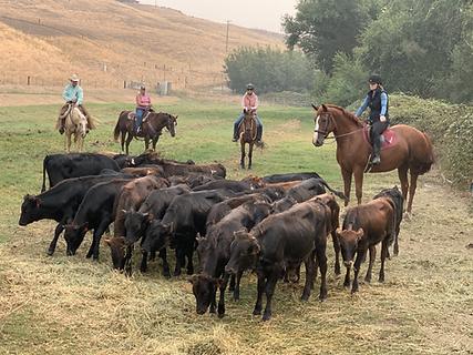Buster cattle work.jpg