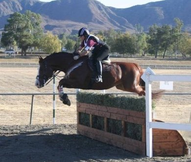 Liam fence 3 steeplechase crop
