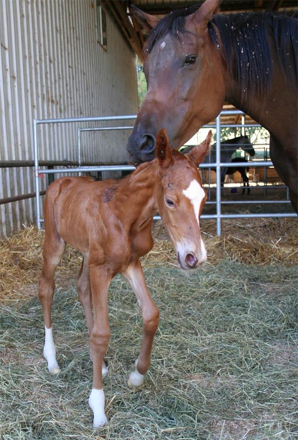 Venada and Liam's baby girl 1
