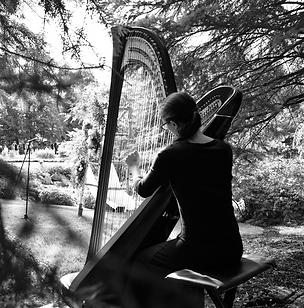 Metropolitan Players Harp