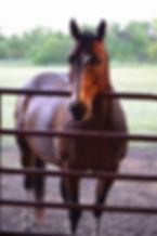 Dooley at Lazy Bucks Ranch