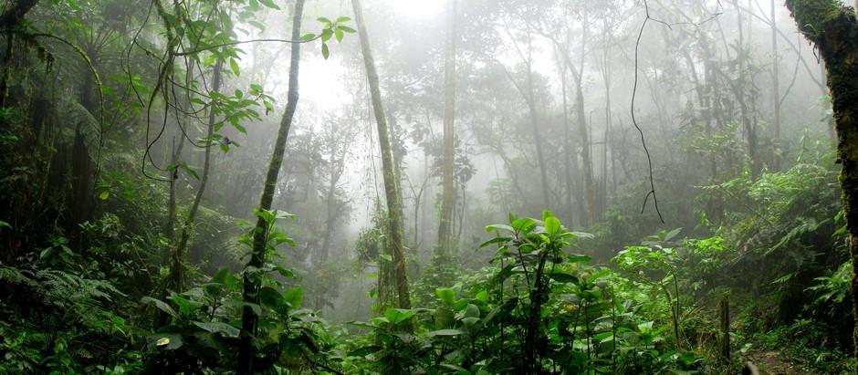AMAZÔNIA, da negligência à exploração