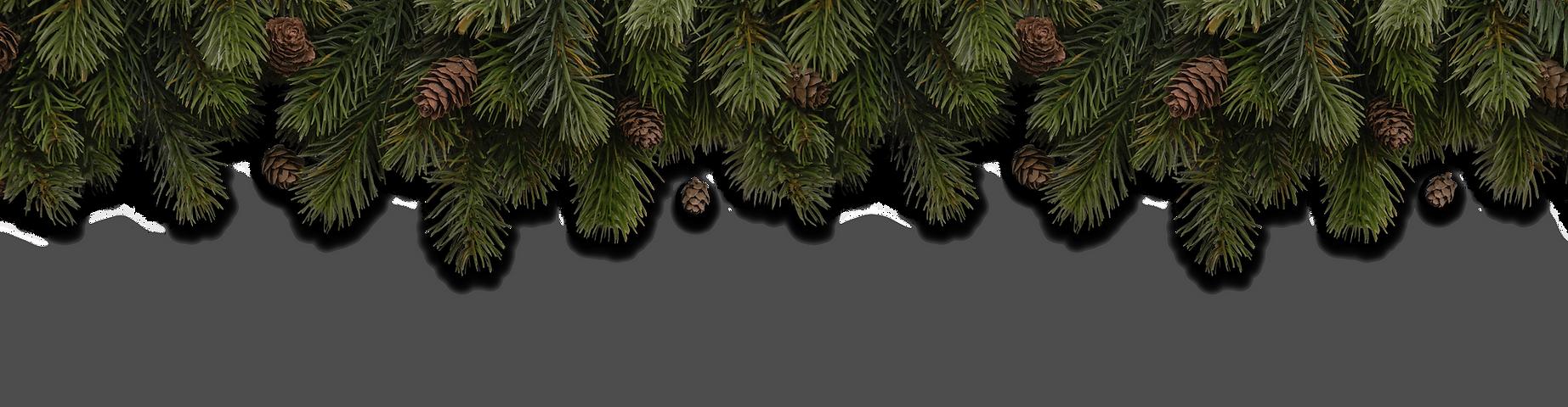 fir_branches.png