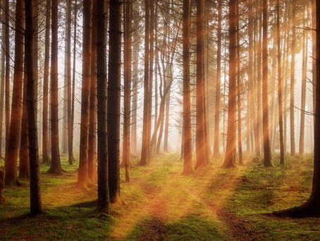10000 деревьев
