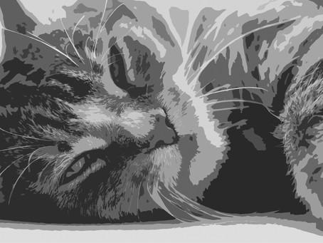Жил да был серый кот за углом