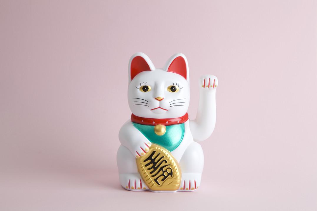 Cat calling fortune