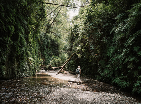 Adventure Wedding + Elopement in Fern Canyon - Northern California - WITH Sample Elopement Timeline!