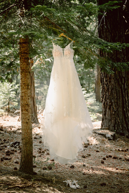 A wedding dress hanging in a tree