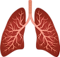 157-1578661_lungs-png-respiratory-system