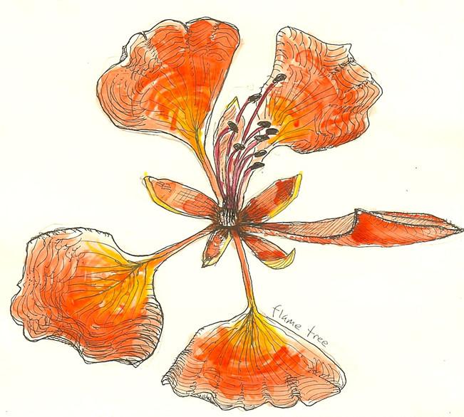 watercolor, pen