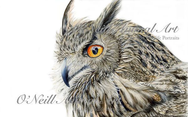 Long-Eared-Owl-no.3-copy.jpg