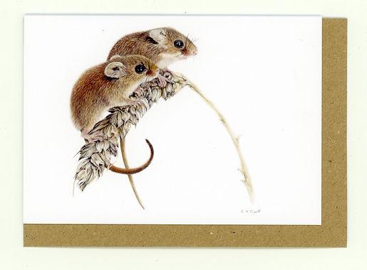 HTwop Harvest Mice. Harvest Mouse. Harvest Mice. Wheat. British Wildlife. Wildlife Artist. Coloured Pencil Artist.