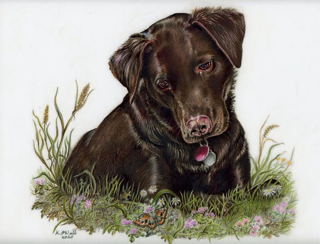 Labrador and butterfly