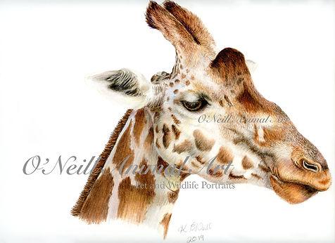 img-Giraffe001.jpg