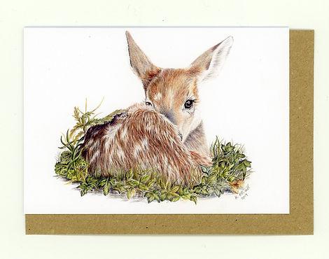 Fawn. Baby Deer. Deer/ British Wildlife. Wildlife Portraits.