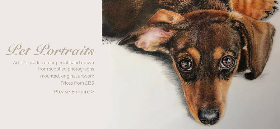 Pet-Portraits for website.jpg