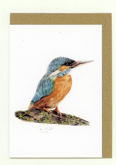 Kingfisher. Fisher. British Birds. British Wildlife. Wildlife Artist. Coloured Pencil Artist.