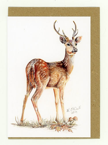 Buck. A young male deer. Young stag. Deer. British Wildlife.Wildlife Portraits. Coloured Pencil Artist. Wildlife Artist
