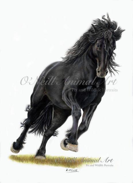 The-Black-Horse-1.jpg