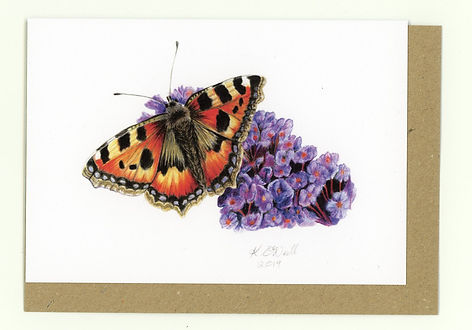 Butterfly. Tortoiseshell Butterfly on Buddleia. British Wildlife. Wildlife Artist. Coloured Pencil Artist.