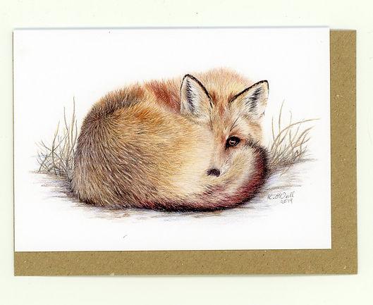 Fox. Red Fox. Fox cub. British Wildlife, Wildlife. Wildlife Artist. Coloured Pencil Artist