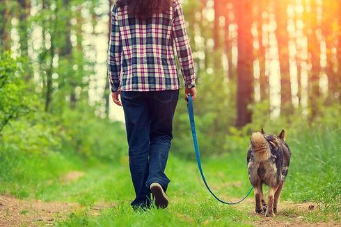 dogwalkroutine-900x600.jpg