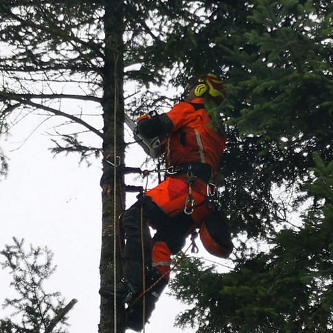 Baumpflege1.jpg