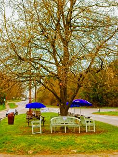 Tree Seating