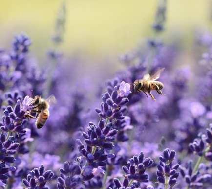 Pollinator strategy creating a buzz in Southend
