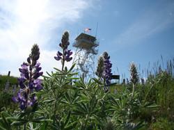 Warren Peak Lookout Tower
