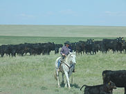Crow Creek Guest Ranch | South Dakota