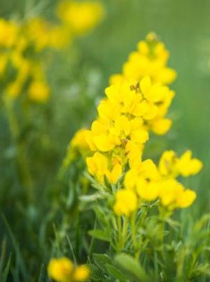 HH Flowers.jpg