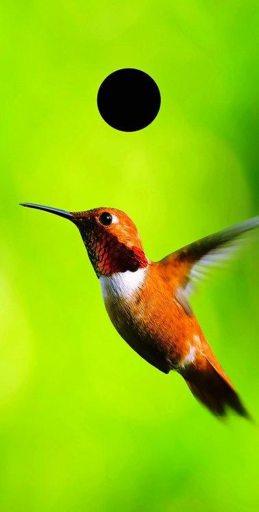 Cartoons 15 Hummingbird