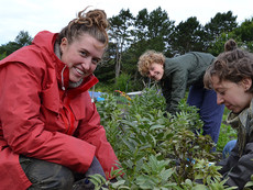 BESAT - Vi søger en barselsvikar til undervisning i Markedshave og Levedygtigt Jordbrug