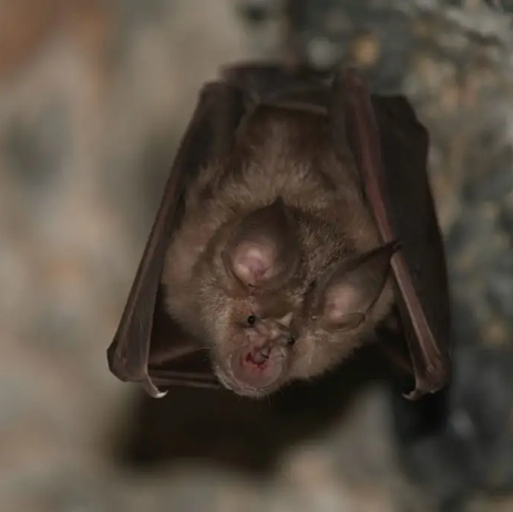 LOCAL: Rabid bat found inside young child's bedroom in Johnsburg