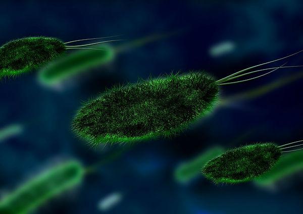 טיפול בחיידק ההליקובקטר פילורי-גליה יהודה-הבית לנטורופתיה במודיעין