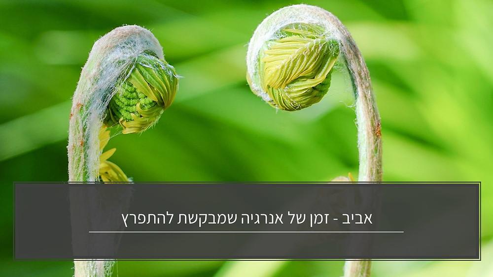 אביב - זמן של אנרגיה שמתבקשת להתפרץ ואיך זה קשור לגוף-גליה יהודה-הבית לנטורופתיהה